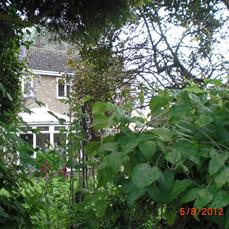 英式小楼掩映在花叶扶疏之间。